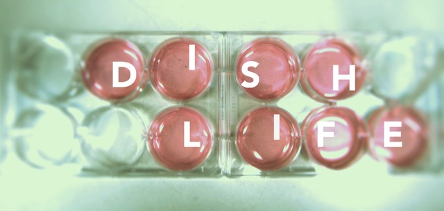 DISH LIFE title1.jpeg